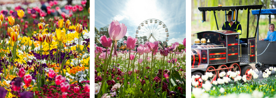 Floriade Canberra Gallery Images