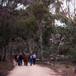 Mulligans Flat Woodlands Sanctuary Twilight Tour