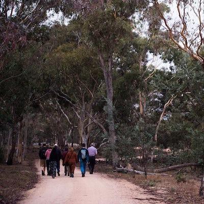 Mulligans Flat Woodlands Sanctuary Twilight Tour_MustCredit_VisitCanberra