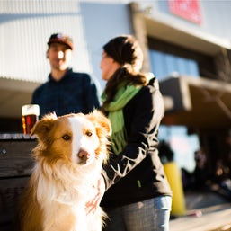 Take your dog with you to Capital Brewing