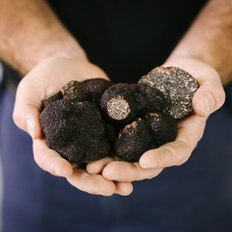 Eat, hunt, taste, cook and learn all things truffles at The Truffle Festival