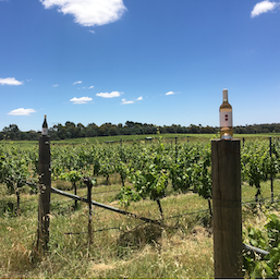Explore the wineries surrounding Canberra, all 35 of them