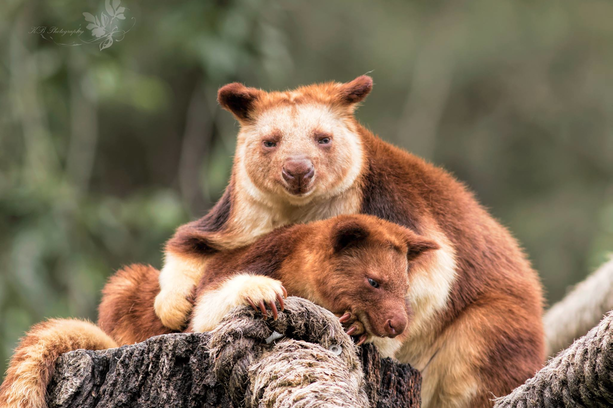 Visit the animals at the National Zoo & Aquarium